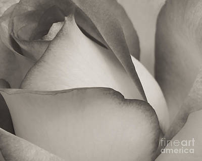 Florida Flowers Photograph - Antique Rose by Sabrina L Ryan