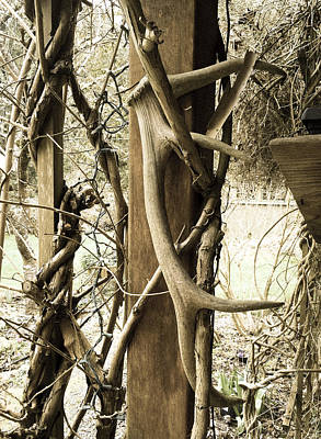 Photograph - Antler And Vine by Ronda Broatch