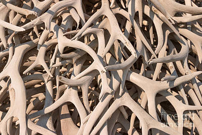 Photograph - Antler Collage by Charles Kozierok