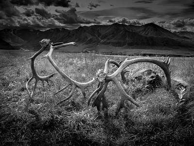 Antlers In Black And White Art Print by Andrew Matwijec