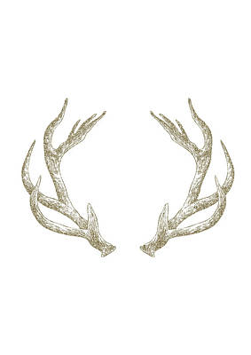 Deer Digital Art - Antlers by Randoms Print