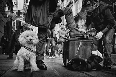 Poodle Photograph - Antonio, Ultimo Lucidascarpe Di Napoli by Antonio Grambone