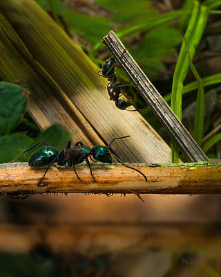 Bug Eyes Photograph - Ants Adventure 2 by Bob Orsillo
