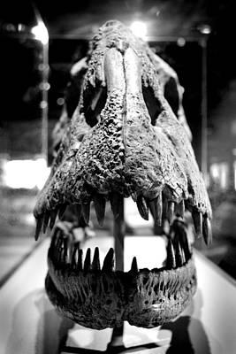 Photograph - Apatosaurus Skull by Richelle Munzon