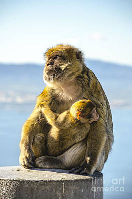 Photograph - Ape Mother And Child by Deborah Smolinske