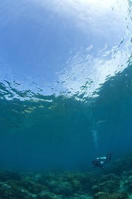 Beastie Boys - Apo Island Marine Park, Philippines by Stuart Westmorland