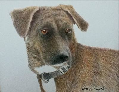 Mountain Cur Drawing - Appalachian Mountain Cur Hound by William Smith