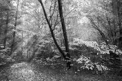 Appalachian Mountain Trail In Black And White Art Print by Debra and Dave Vanderlaan