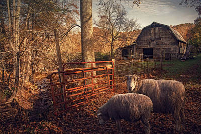 Photograph - Appalachian Sheep by William Schmid