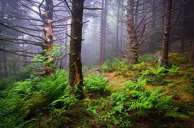 Photograph - Appalachian Trail Blue Ridge Mountains Nc Forest by Dave Allen