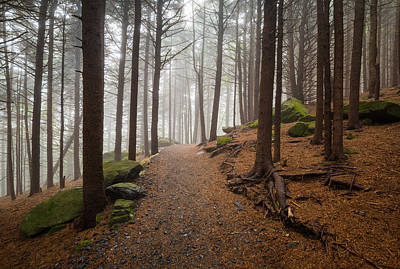 Forest Photograph - Appalachian Trail Landscape Photography In Western North Carolina by Dave Allen