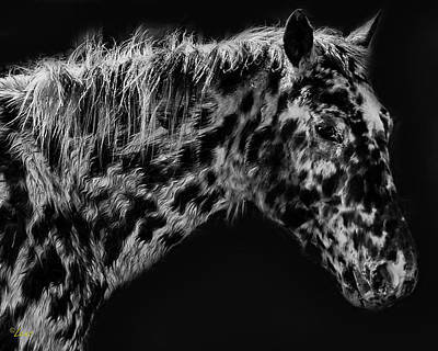Lenz Wall Art - Photograph - Appaloosa Bw  by George Lenz