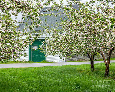 Photograph - Apple Blossom Barn by Susan Cole Kelly
