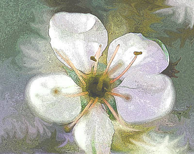 Photograph - Apple Blossom by Peg Toliver