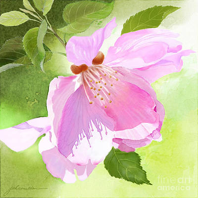 Painting - Apple Blossom Three by Joan A Hamilton