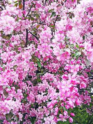 Fathers Day 1 - Apple blossoms by Aimee L Maher ALM GALLERY