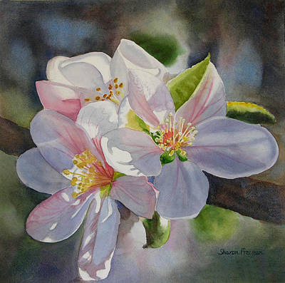 Apple Watercolor Painting - Apple Blossoms In Sunlight by Sharon Freeman