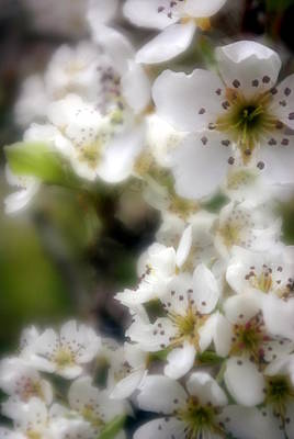 Print featuring the photograph Apple Blossoms by Ken Dietz