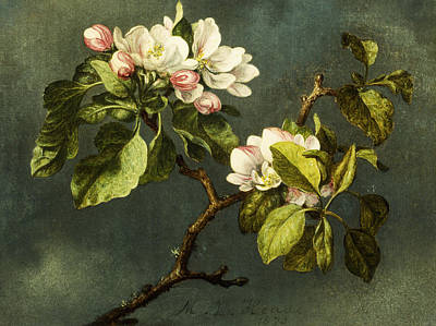 White Blossoms Painting - Apple Blossoms by Martin Johnson Heade