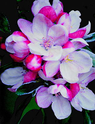 Photograph - Apple Flowers by Kathy Sampson