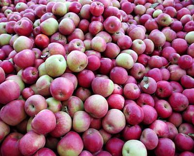Apple Harvest Art Print by Brooke Finley