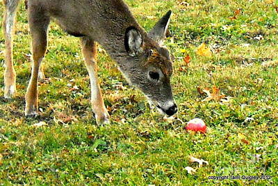 Photograph - Apple Of Fawn's Eye by Tami Quigley