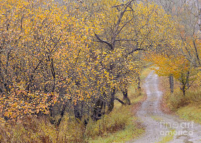 Photograph - Apple Orchard Road by Alan L Graham
