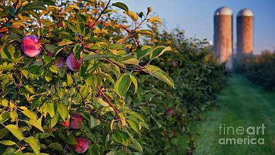 Photograph - Apple Orchard Sunrise Autumn by Henry Kowalski