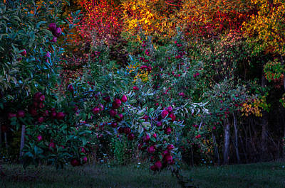 Photograph - Apple Orchard Sunset by Gene Sherrill