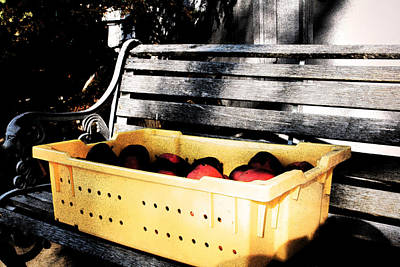 Art Print featuring the photograph Apple Picking by Meaghan Troup