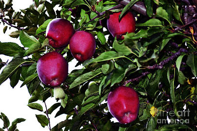 Mannequin Dresses - Apple Picking Time by Kevin Fortier
