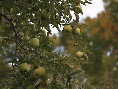 Photograph - Apple Picking Time by Patricia McKay
