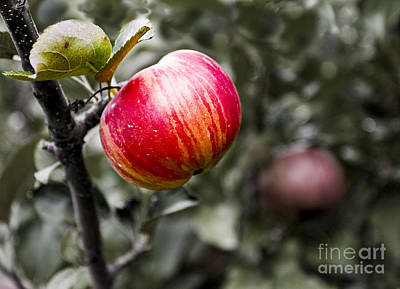 Photograph - Apple by Steven Ralser