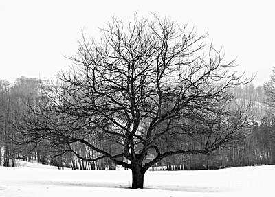 Country Snow Photograph - Apple Tree In Winter by Elena Elisseeva