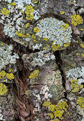 Photograph - Apple Tree Lichens by Jim Zablotny