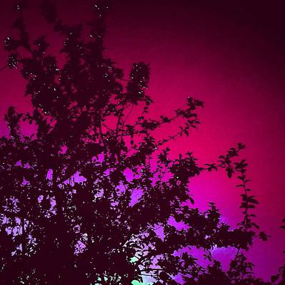 Apple Photograph - Apple Tree/pink Background by Candy Floss Happy