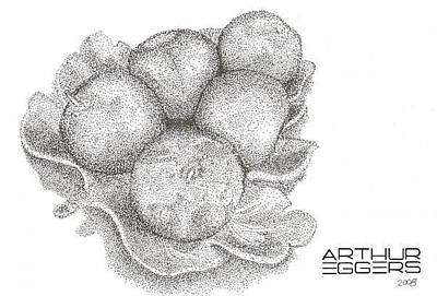 Drawing - Apples by Arthur Eggers