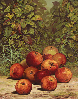 Ripe Drawing - Apples Circa 1868 by Aged Pixel