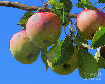 Photograph - Apples Ready To Harvest by Dawn Gari