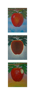 Fruit Tree Art Giclee Painting - Apples Triptych 2 by Don Young