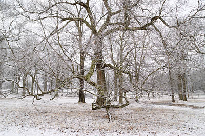 Appleton Photograph - Appleton Trees With Snow by David Stone