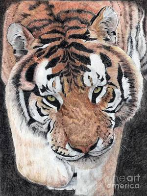 Drawing - Approaching Tiger by Audrey Van Tassell