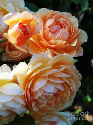 Apricot Dahlias Original by Kathy McClure