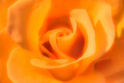 Photograph - Apricot Tea Rose by  Onyonet  Photo Studios