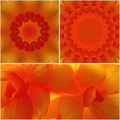Tapestries - Textiles Photograph - Apricot by Tom Druin