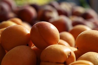 Photograph - Apricots by Terry Horstman