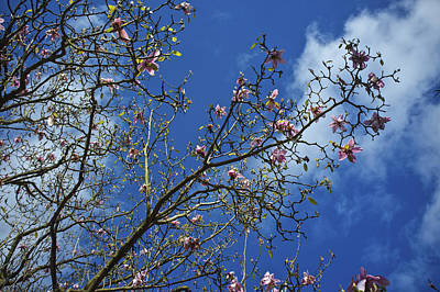 Photograph - April Blossom by Christopher Rees