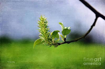 Photograph - April Blossom by Randi Grace Nilsberg