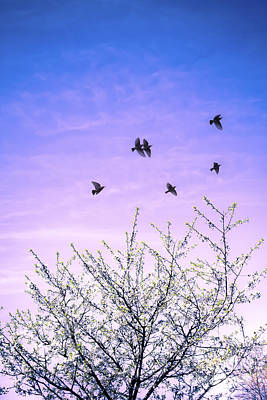 Flocks Of Birds Photograph - April Dawn by Jan Bickerton