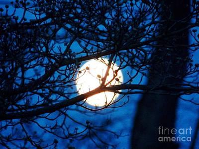 April Morning Moon Art Print by Judy Via-Wolff